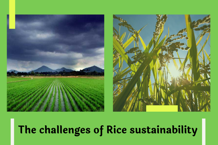 The challenges of Rice sustainability - The increasing World's population and Climate change