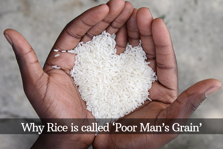 Why rice is called poor man's grain