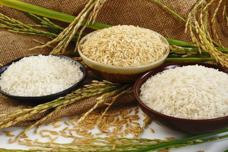 Rice Grain for General Purposes
